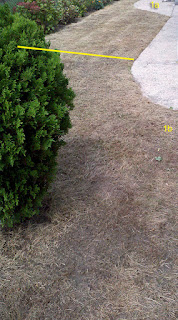 Lawn 1b eight days after BurnOutII spraying