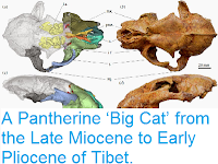 http://sciencythoughts.blogspot.co.uk/2014/11/a-pantherine-big-cat-from-late-miocene.html