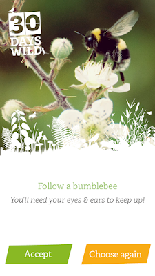 "A screenshot of the 30 Days Wild app, showing a picture of a bumblebee on a flower and the text ""Follow a bumblebee. You'll need your eyes & ears to keep up!"""