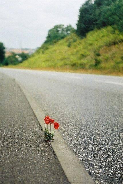 Brave | beautiful flower