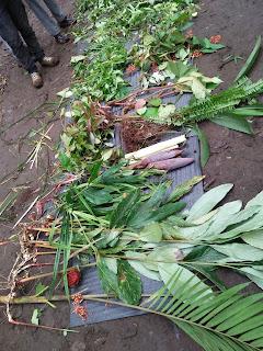 Tanaman Survival