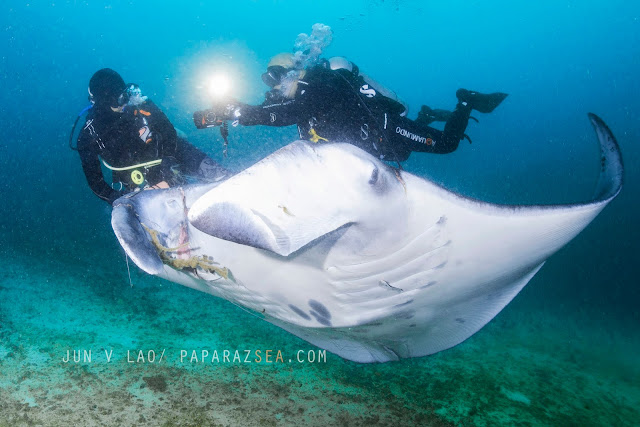 Scuba diving, UNDERWATER PHOTOGRAPHY, BICOL, DIVE MANTA BOWL, DIVE TICAO, DIVE PHILIPPINES, PAPARAZSEA