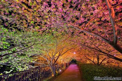Tunnel of Love, Kawazu-cho, Shizuoka, Japan