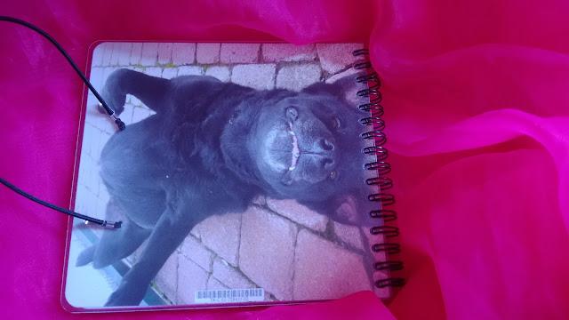 wieder Schwarzer Labrador Hund names Angel