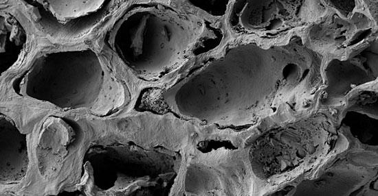 As coisas mais bizarras que você sempre quis ver no microscópio - Borra de café
