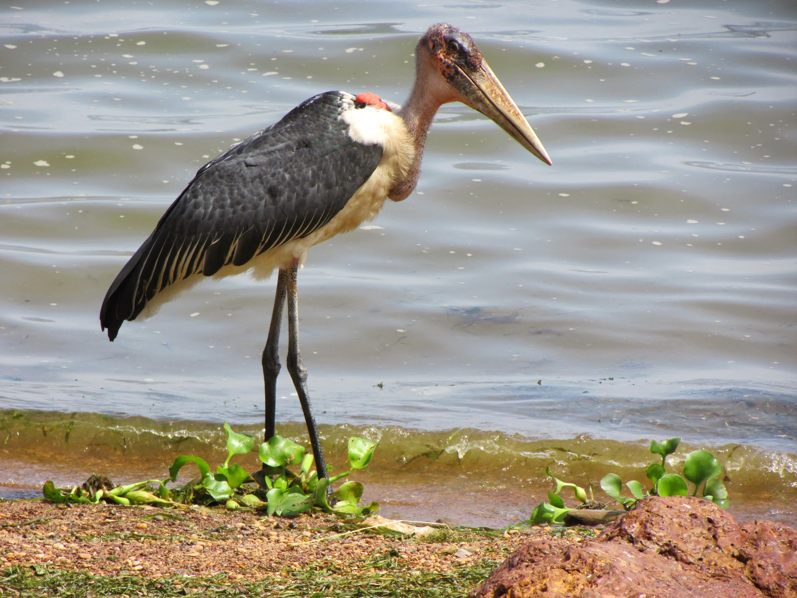 beauty in small things the very old marabou stork some