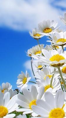 download besplatne slike za mobitele cvijeće proljeće