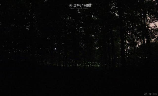 大農大富平地森林園區-10
