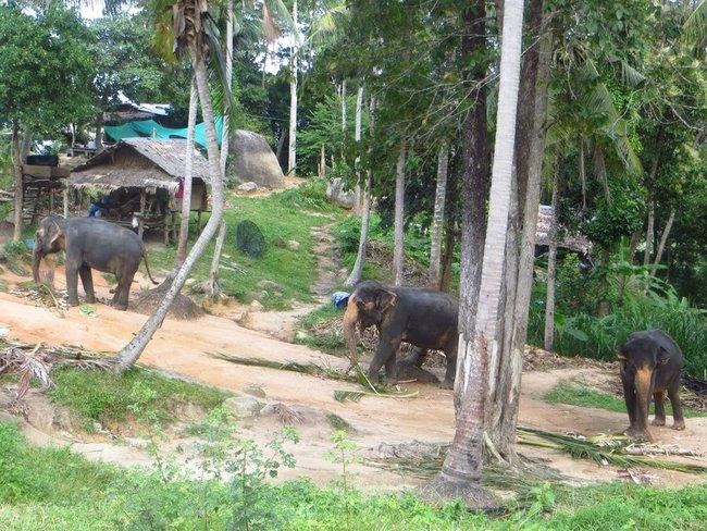 Три слона в джунглях