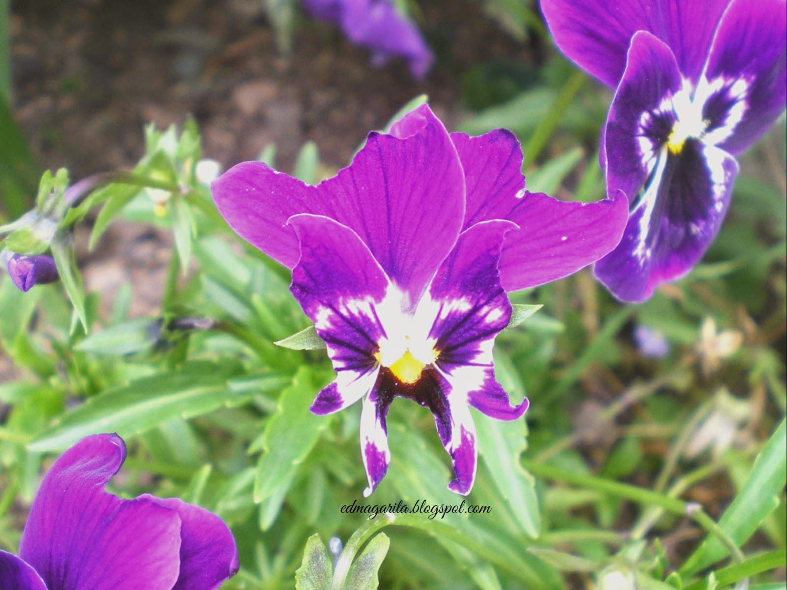 Flores De Colores Naturales Arte Manual Tutorial Flores