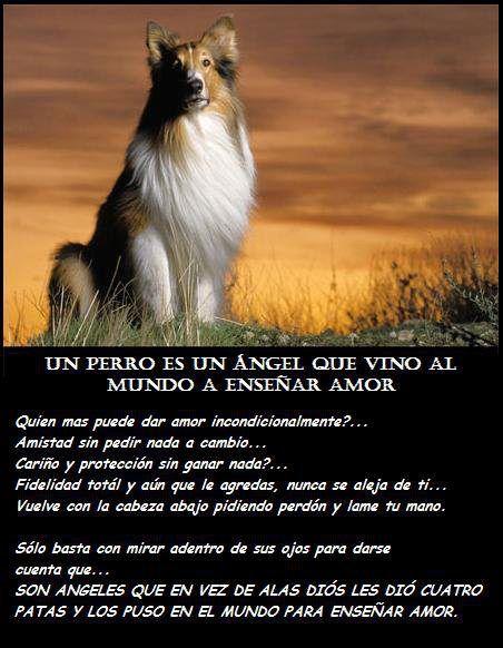 Comportamiento animal un perro es un angel que vino al - Cuando se puede banar a un perro ...