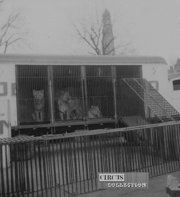 les roulottes cages des fauves sont installées