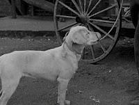 """Кадр из фильма Чарли Чаплина """"Собачья жизнь"""" / A Dog's Life (1918) - 7"""