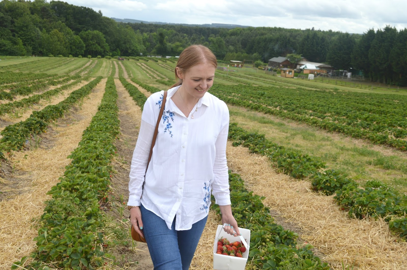 Strawberry Picking at Brocksbushes in Northumberland