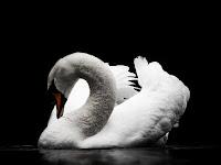 Black and White (Sebuah Pesan dari Masa Lampau)