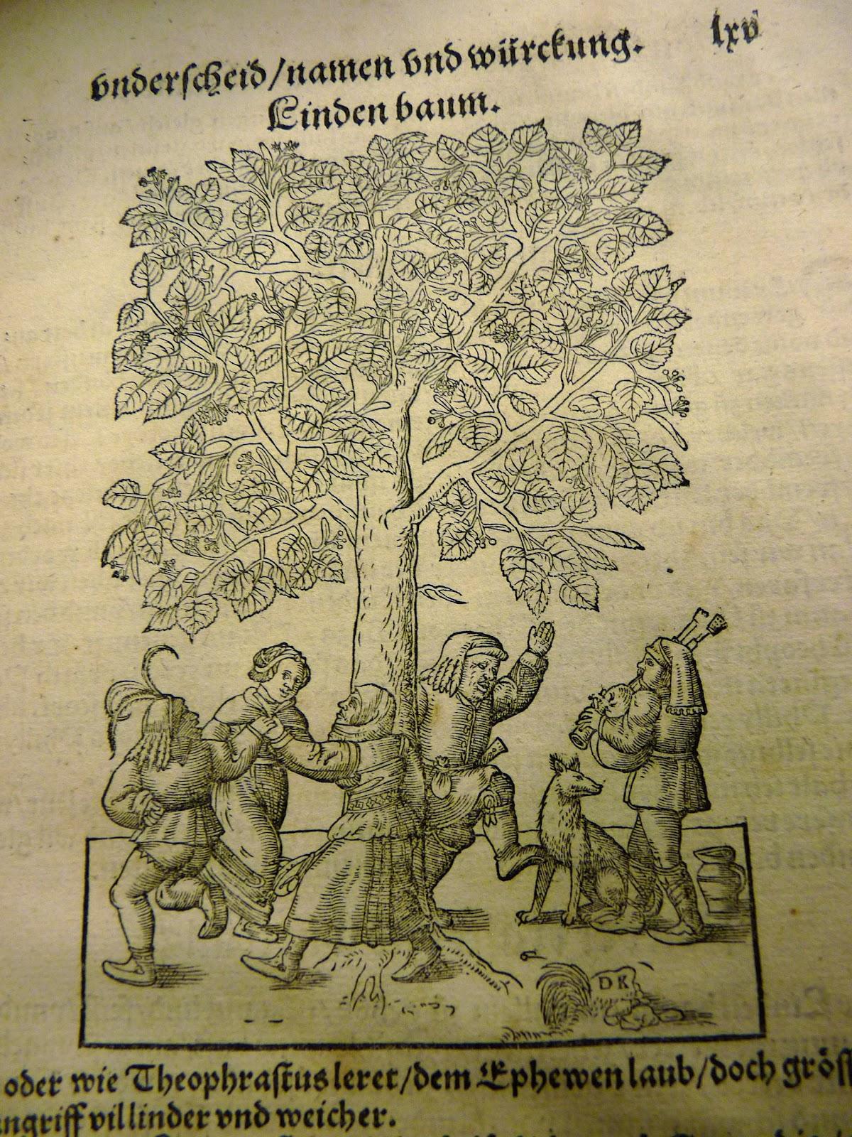 Woodcut illustration of Botanical Graphic Ornament — Stock ...  |Botanical Woodcut