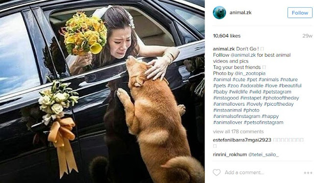 This Viral Video of A Bride Saying Goodbye To Her Dog Will Move You To Tears