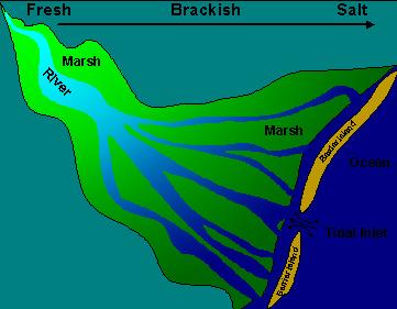 Essays: Estuary Meditation