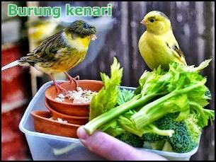Sayuran penurung birahi burung lovebird