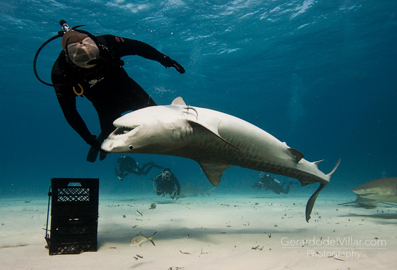 Camara de fotos acuatica sony 37