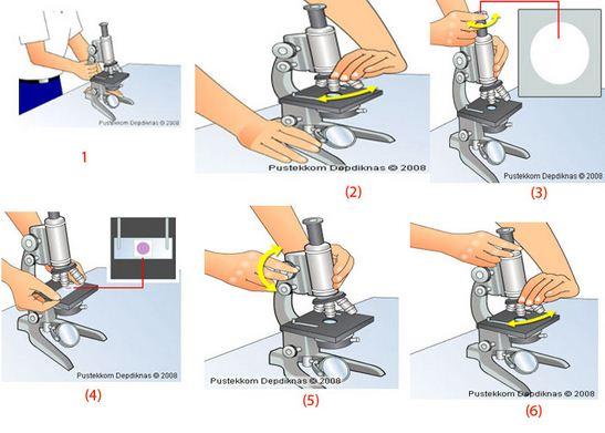 Cara dan Langkah-langkah Menggunakan Mikroskop dengan Baik dan Benar
