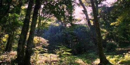 Taman Nasional Gunung Palung (TNGP) kalimantan barat