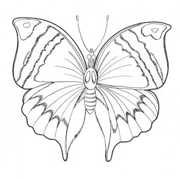 coloring pages detailed butterfly-#18