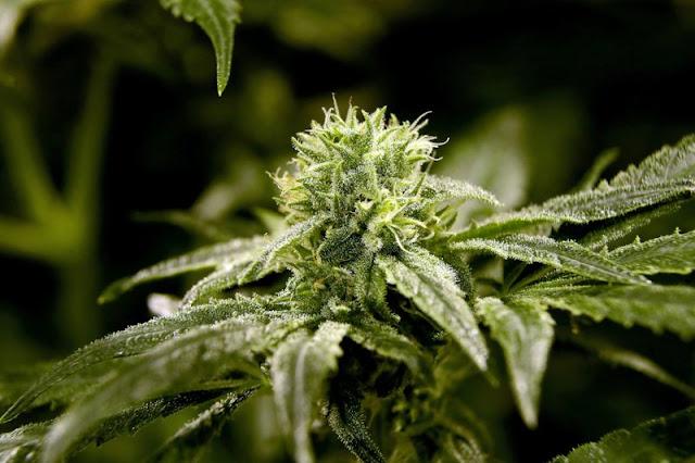 More vaping illnesses reported, many involving marijuana