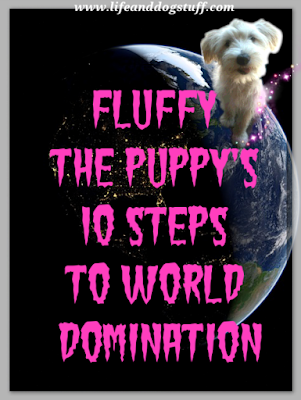 Fluffy the puppy's 10 Steps To World Domination