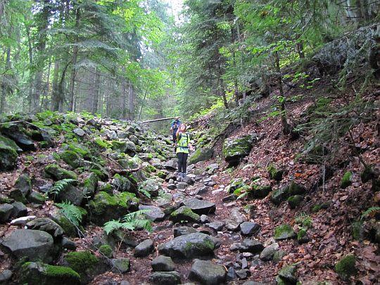 Żółty szlak prowadzi nas dnem rowu wypełnionego kamieniami.