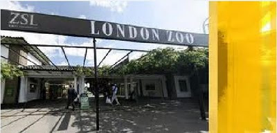 Kebun binatang ZSL London