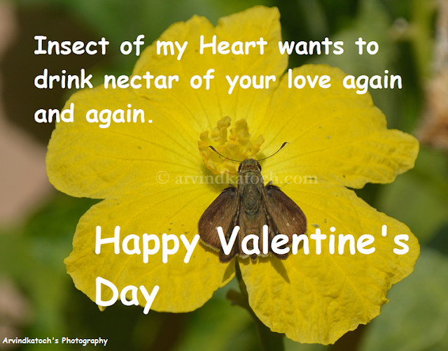 Love, Nectar, Insect, Valentine Day, Card, HD