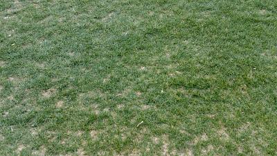 サッカー場でもカモ被害 芝を守りました