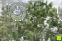befeuchtet: PEDY Großer Fenster Vogelfutterspender, Transparenter Saugfuß Durchsichtiger Vogelhaus Fenster Vogelfutterspender Großer Acryl Vogelfutterspender Vogelfutterstation