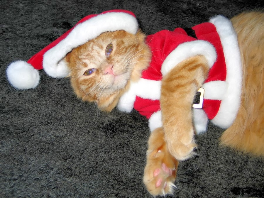Cutest Santa Cats to Make Your Christmas Delightful