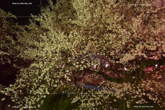 花 桜 夜桜 Nite Sprite Chick Corea