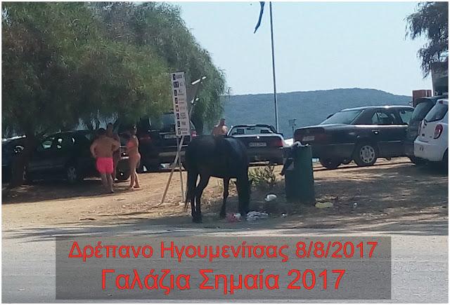 Ηγουμενίτσα: Τα ... αδέσποτα άλογα του Δρεπάνου και η Γαλάζια Σημαία