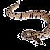 صور الافاعى والثعابين  Snakes