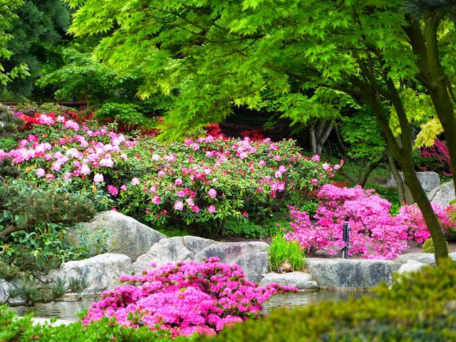 Planten un Blomen im Mai
