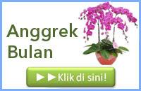 http://www.bunga24.com/p/anggrek-bulan-phalaenopsis.html
