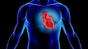 CoQHealth Plus Shaklee membantu meningkatkan tahap kesihatan jantung