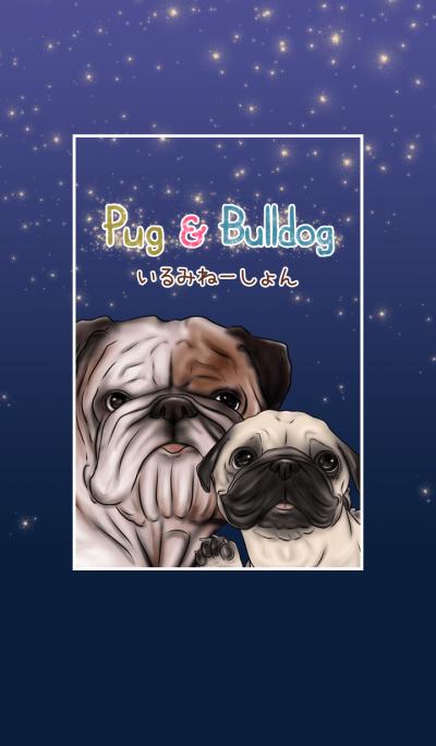 Pug and Bulldog  illumination