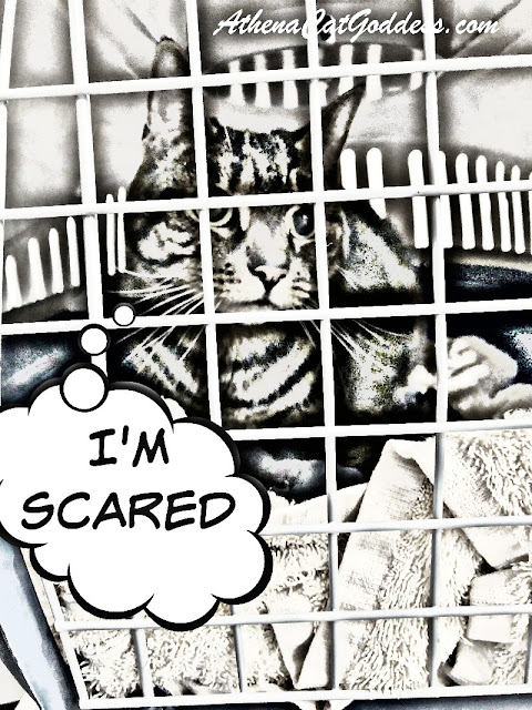Cat in carrier photo art PicMonkey Comic Heroes Sketch