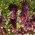 Com fazendas de uvas em Casa Nova e Juazeiro, Labrunier é vendida a grupo espanhol