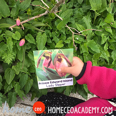 https://www.teacherspayteachers.com/Product/Preschool-Age-2-4-Spring-May-Flowers-Units-by-Home-CEO-3145264