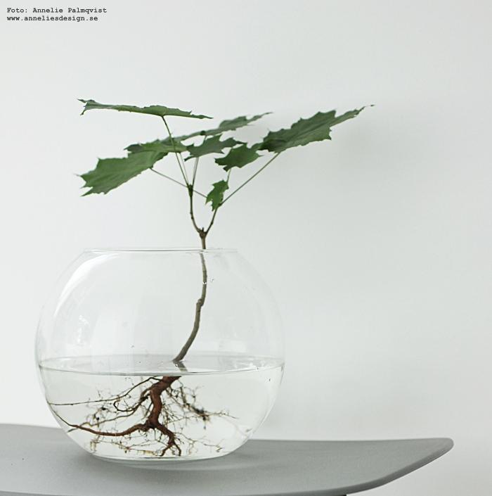växt med rot, rötter, grönt, vas,