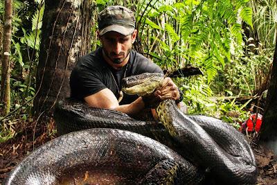 gambar orang menangkap ular anaconda
