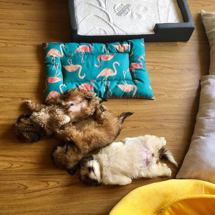 30 Hilariously Adorably Pictures Of Puppy Sleeping As If She Was 'Turned Off'