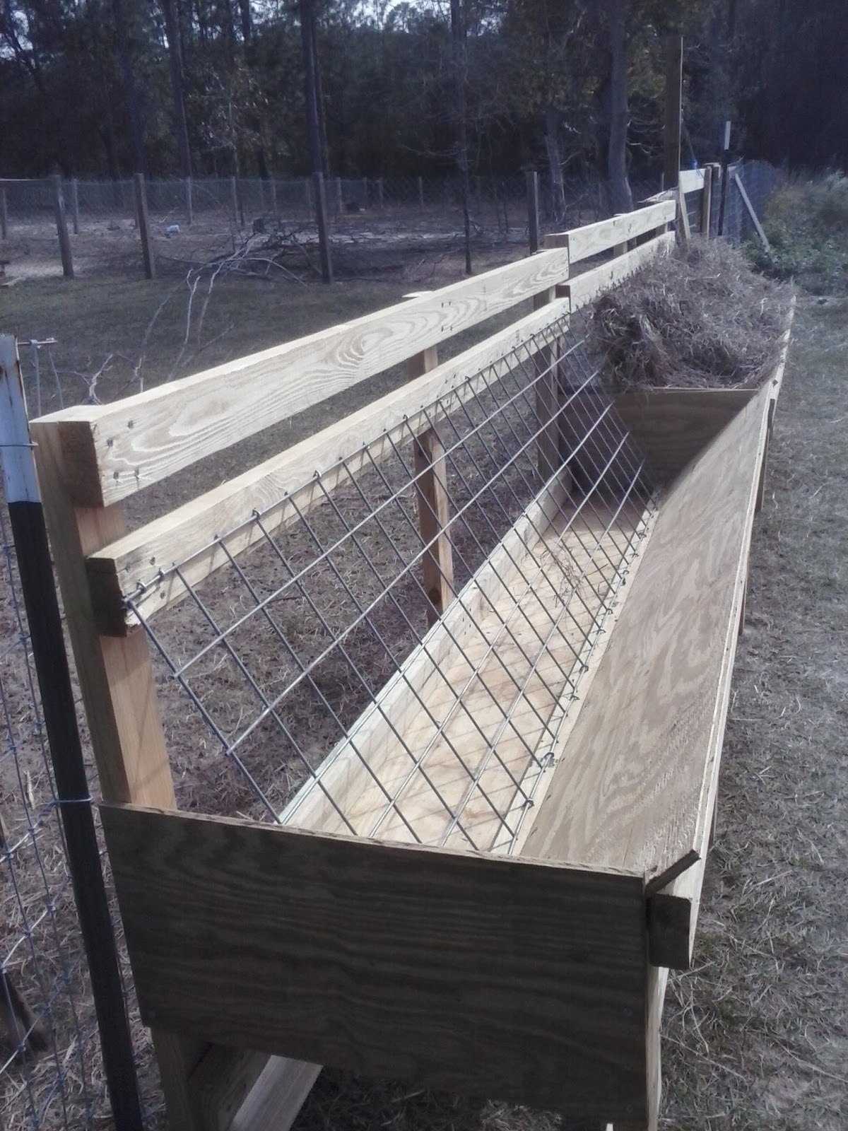 Challenged Survival The Best Hay Feeder For Goats In The