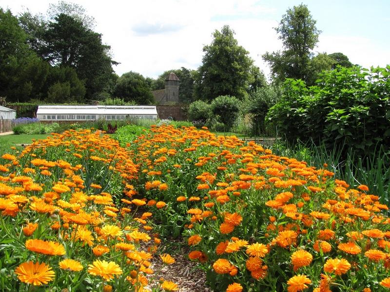 jardín con flores de naranjas